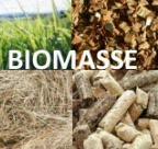 Biomassa